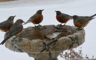 Rockin' Robins