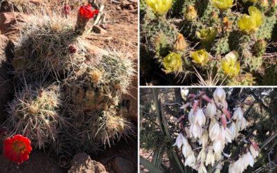 Hike Among the Cactus